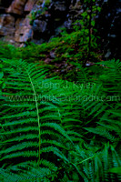 Ferns on Hanging Lake Trail